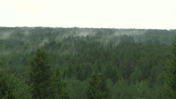 Morgennebel über einem Kiefernwald.