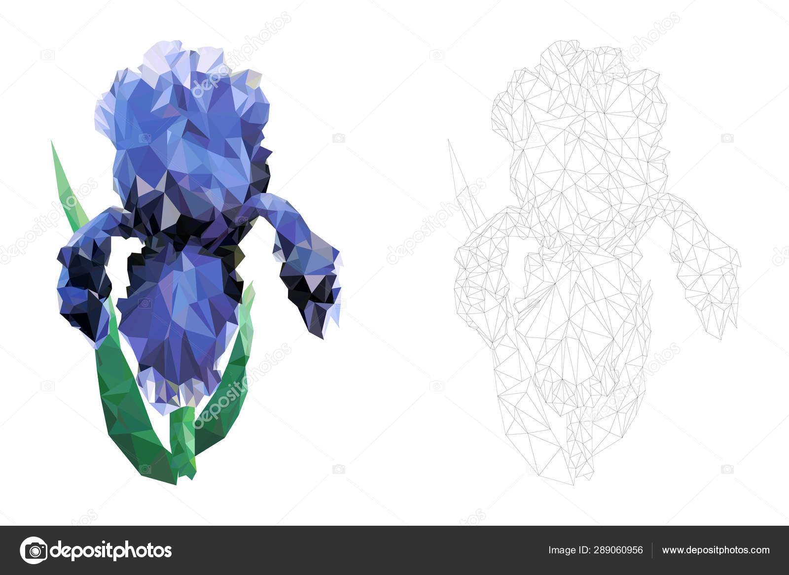 страница раскраски цветок ириса векторная иллюстрация стиле