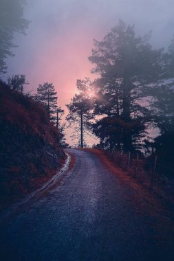 the road with red trees in the mountain