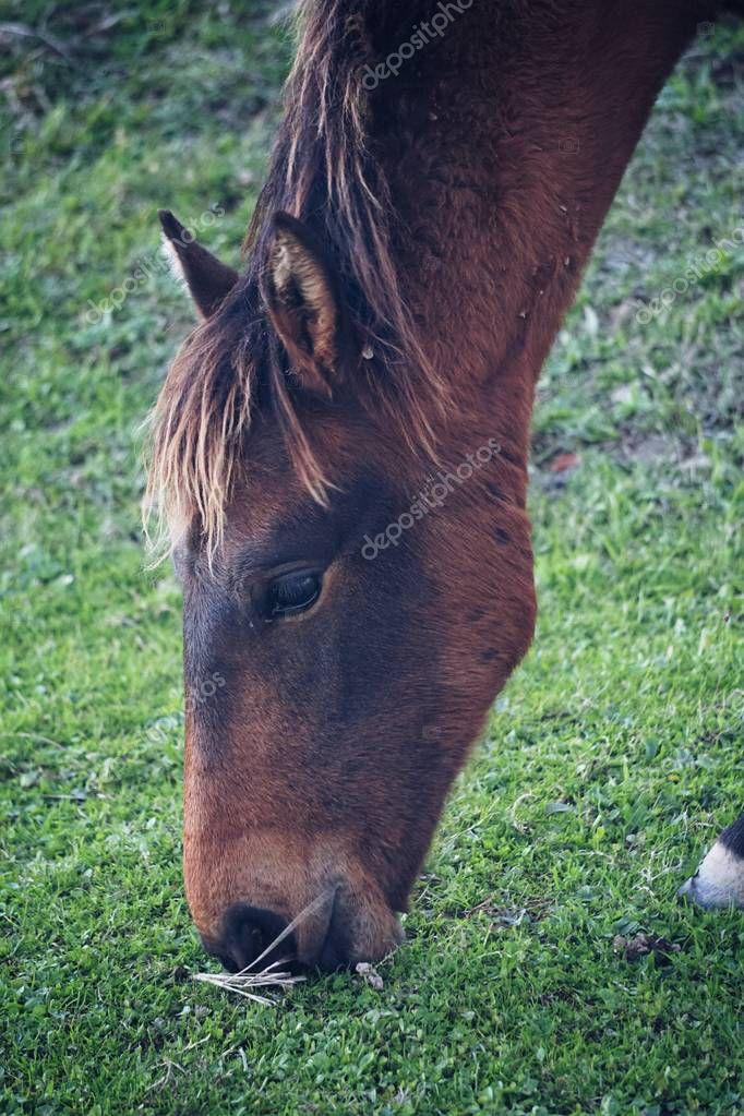the black horse portrait