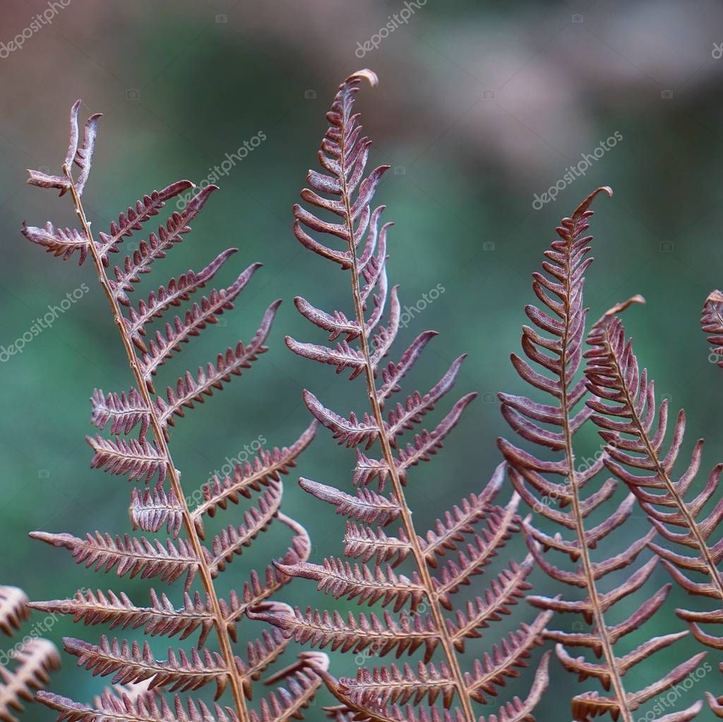 the abstract fern leaf