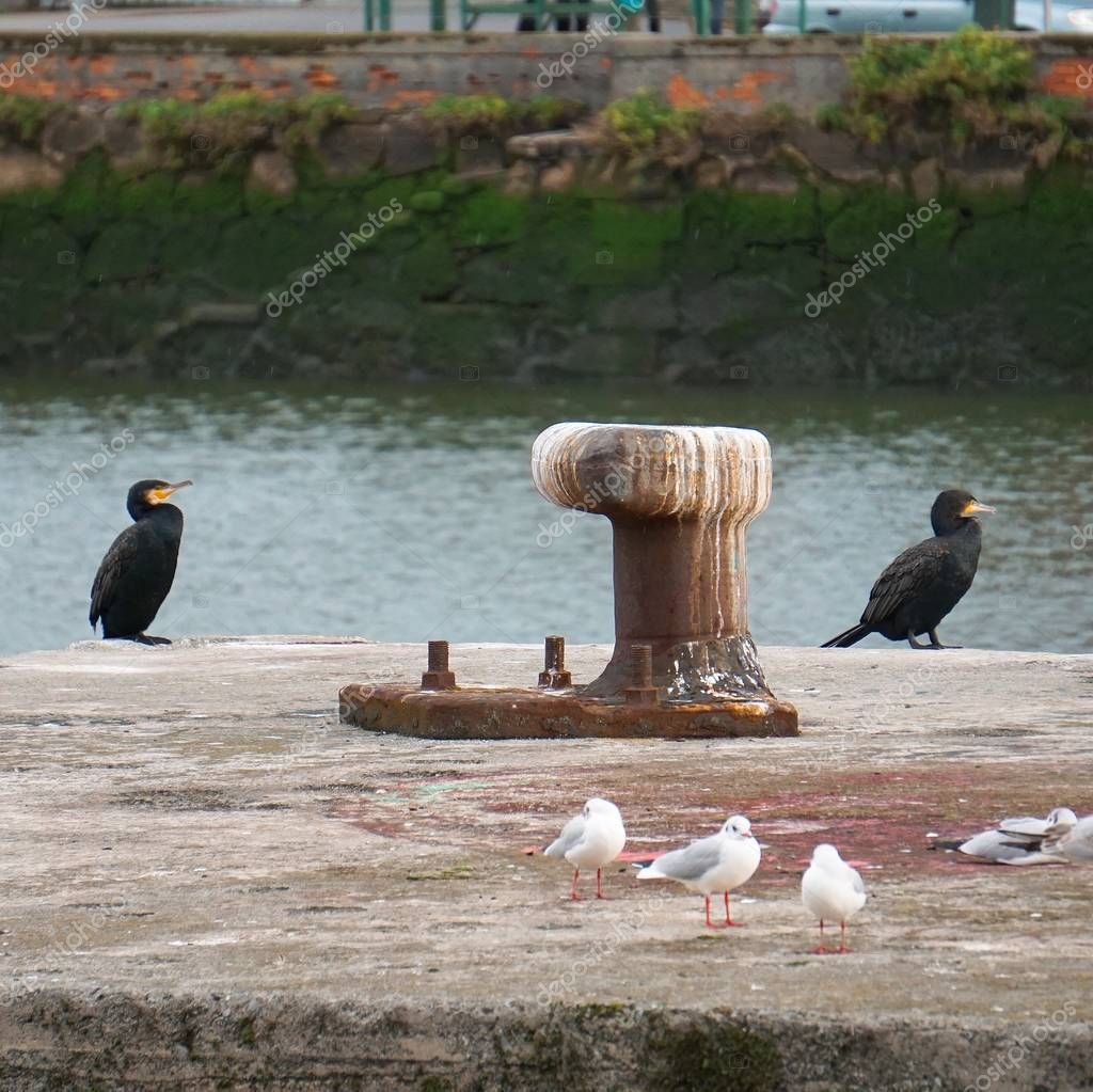 the birds in the nature