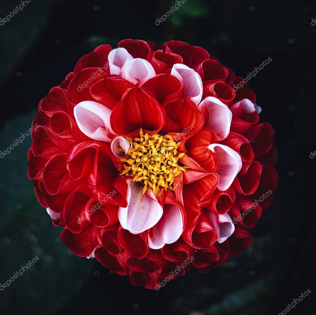 the beautiful red flowers in the garden in the nature