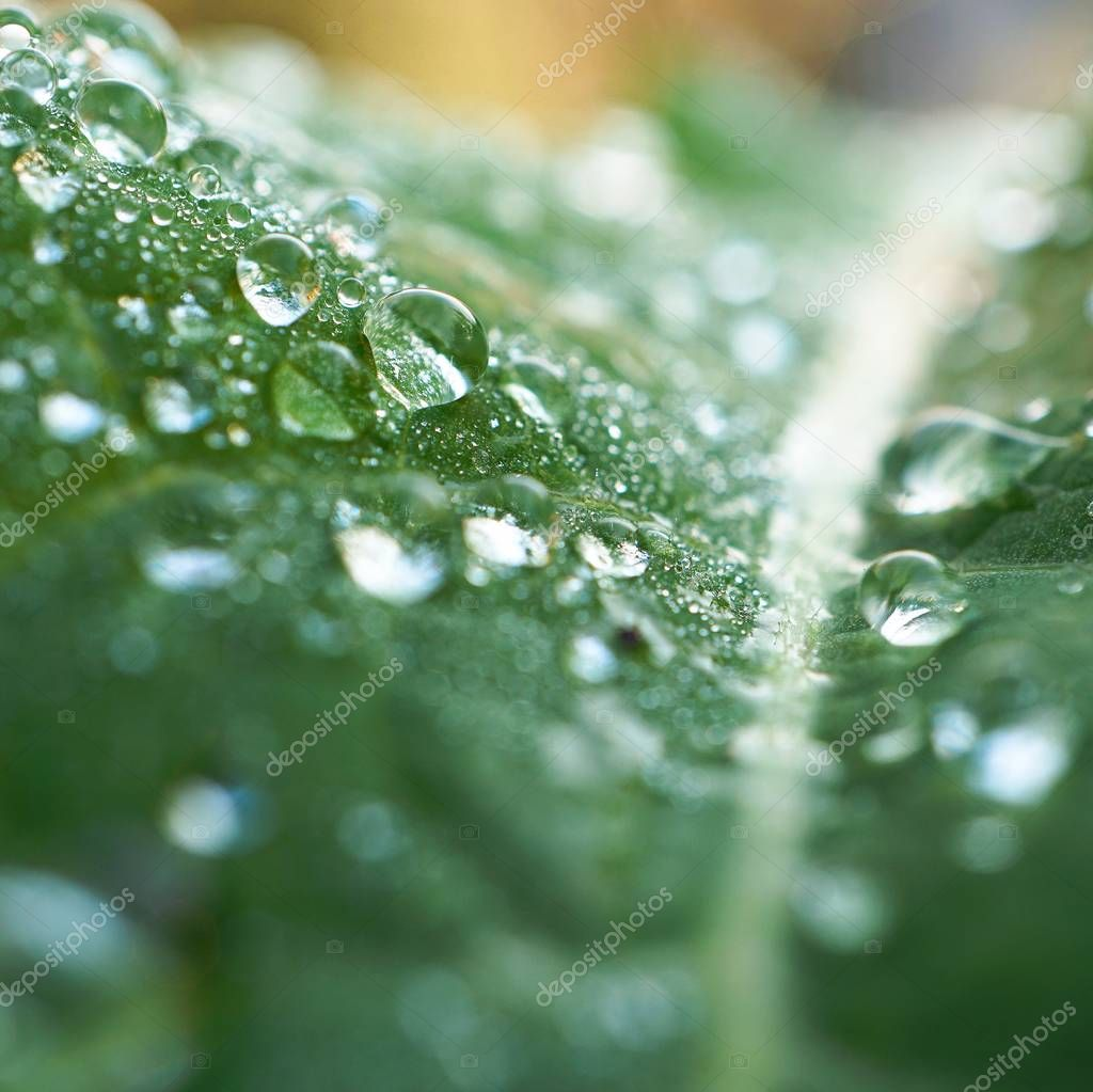 the raindrops on the green plant leaves in the garden in the nature