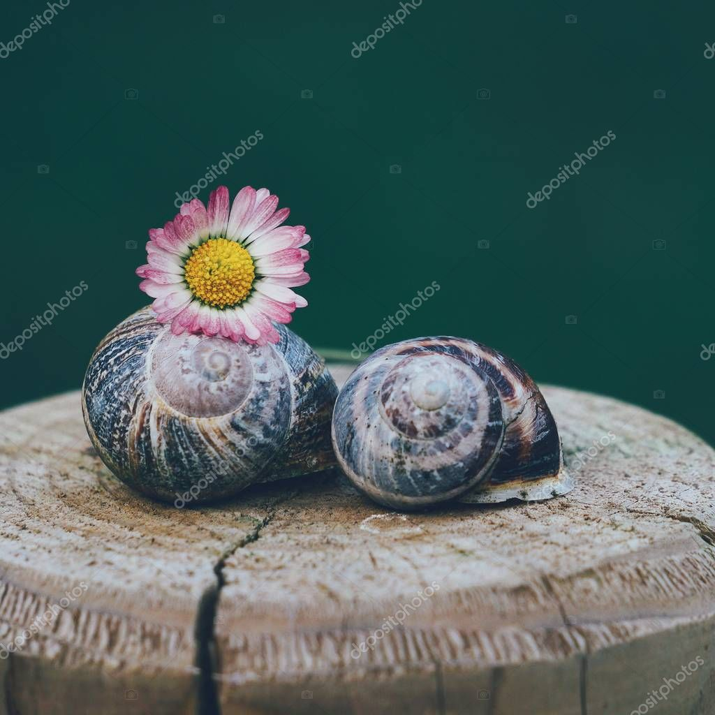 the small snail in the nature