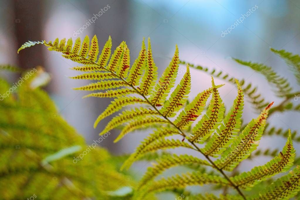 abstract green fern plant leaves texture in the nature