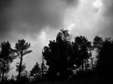 Dark and with view of trees