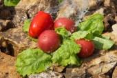 Sport e dieta. Verdure e acqua fresca. Mangiare sano