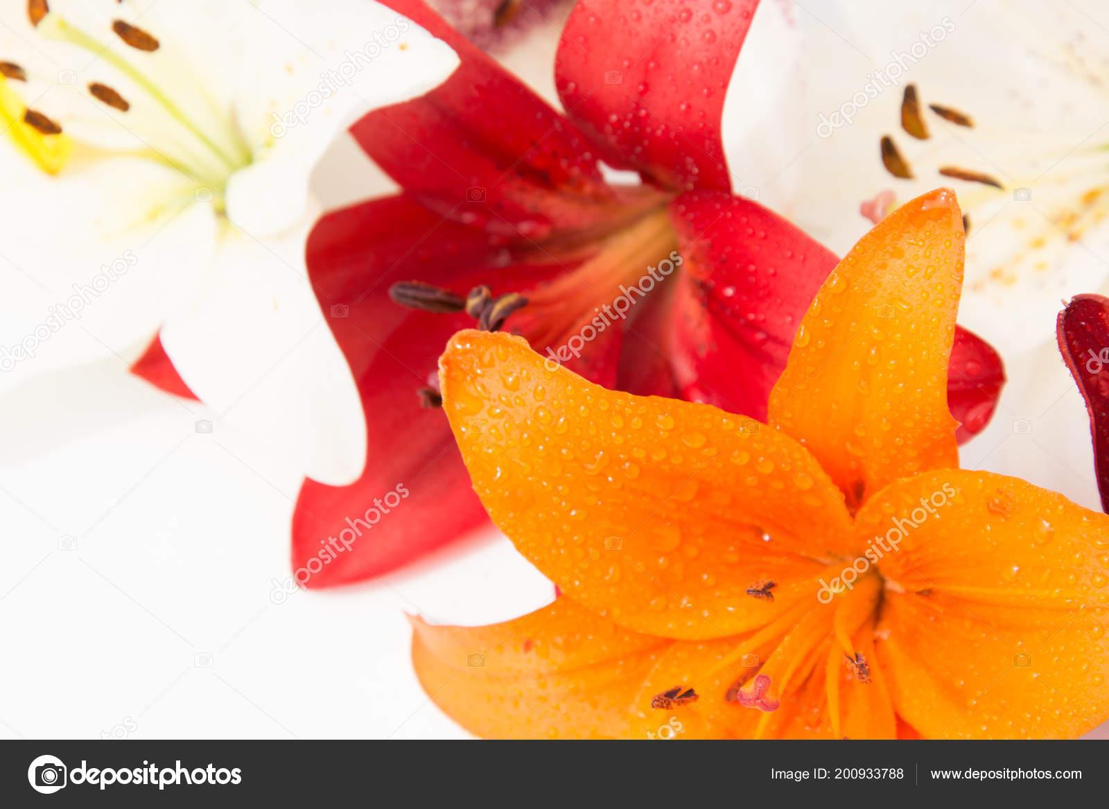 Schöne Frische Blumen Zärtlichkeit Und Angenehmen Geruch Garten