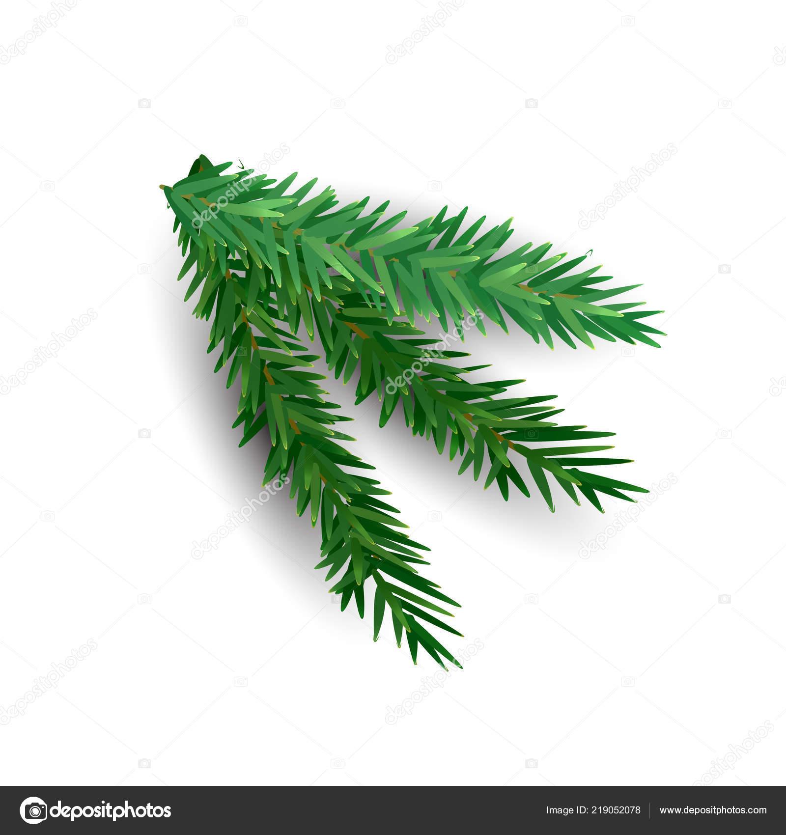 Weihnachtsbaum Ast.Fichte Ast Isoliert Auf Weißem Hintergrund Grüne Tanne