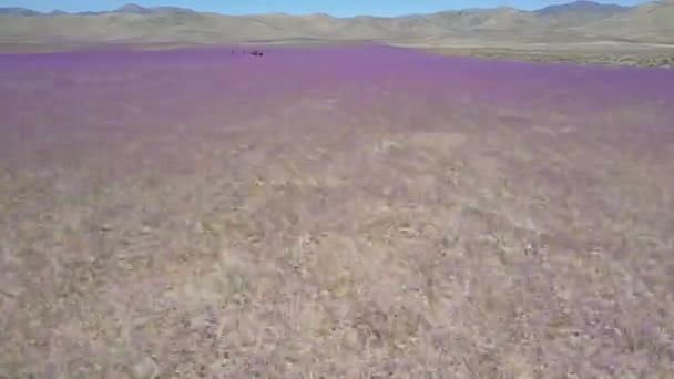 Letecký pohled na pole purpurové květiny