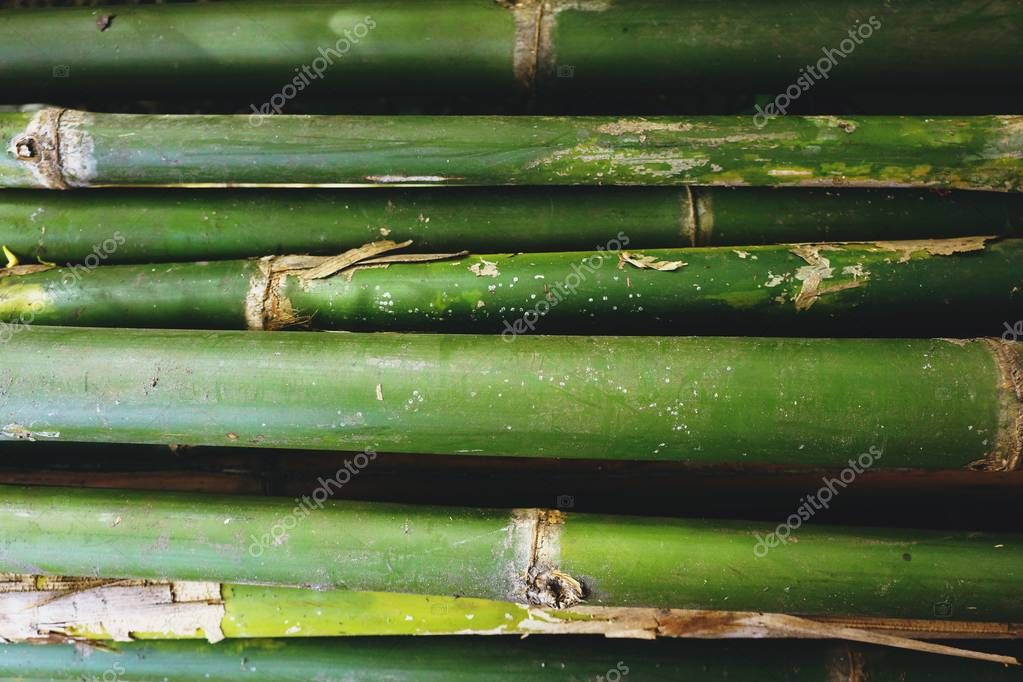 Bamboo is a shrub. Have bamboo shoot is product. the main food of Thai people. In addition, bamboo has the special properties of strength and elasticity that is superior to many synthetic materials. It is popular in making many types of tools.