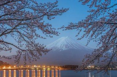 Night view of Sakura cherry blossom and Mt. Fuji at Kawaguchiko lake , Japan  in spring season