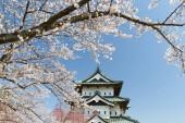 Fotografie Hirosaki castle a Sakuru třešňový květ na jaře. Hirosaki hradní věž není tak velký, ale je to jediný hradní věž v postižené oblasti, které přestavěn v období Edo
