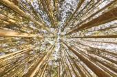 Borový les, zelený Les pozadí ve slunečný den