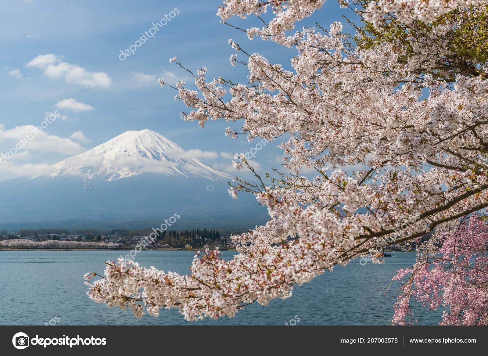 Spring In Japan Wallpaper Sakura Cherry Blossom Fuji