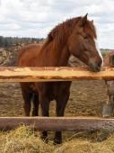 Fotografia Cavallo nella natura. Ritratto del cavallo marrone