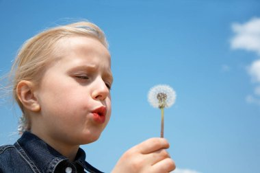 Young blonde girl blows on dandelion