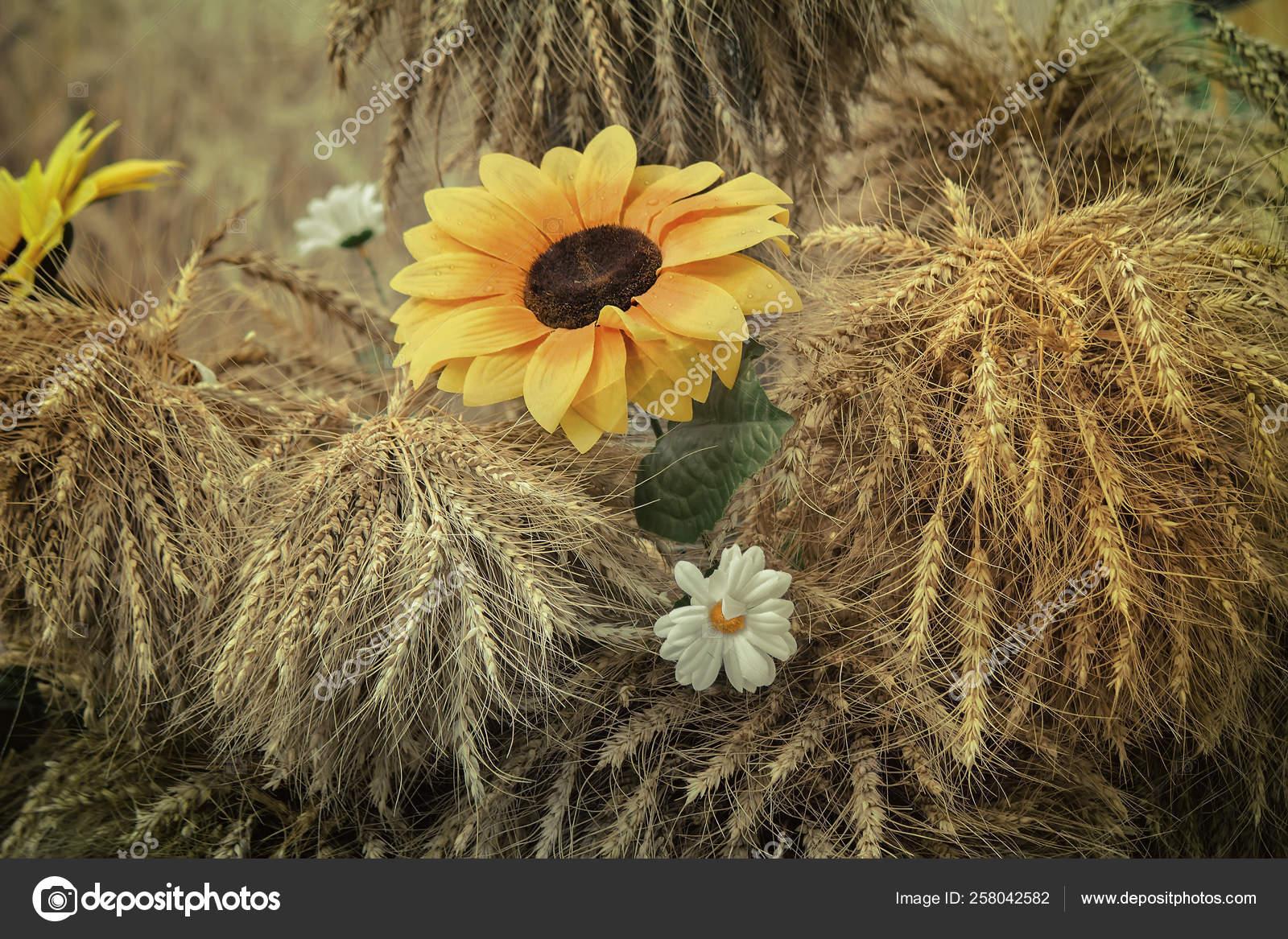 Stillleben Schone Weisse Und Gelbe Kunstblumen Umgeben Von Ahren Reifen Stockfoto C Yayimages 258042582