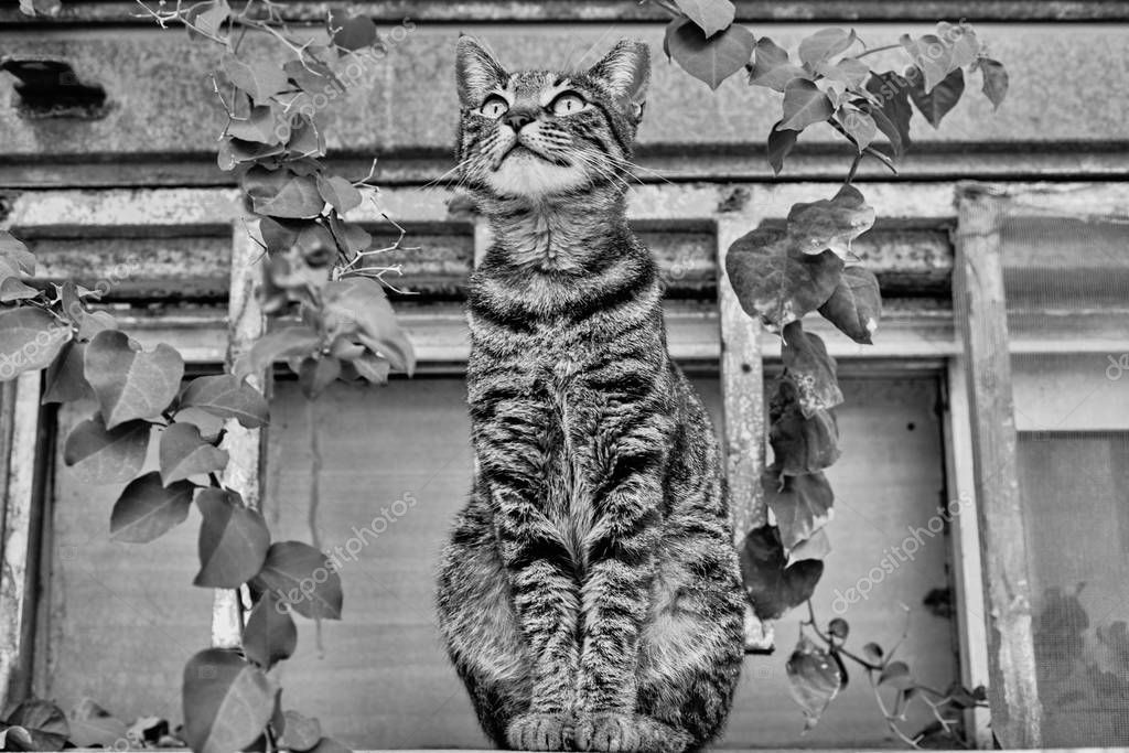 Stretching cat outside with a plant bw