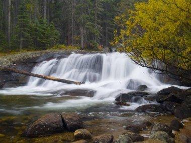 Lower Copeland Falls in an autumn rain - Rocky Mountain National Park.
