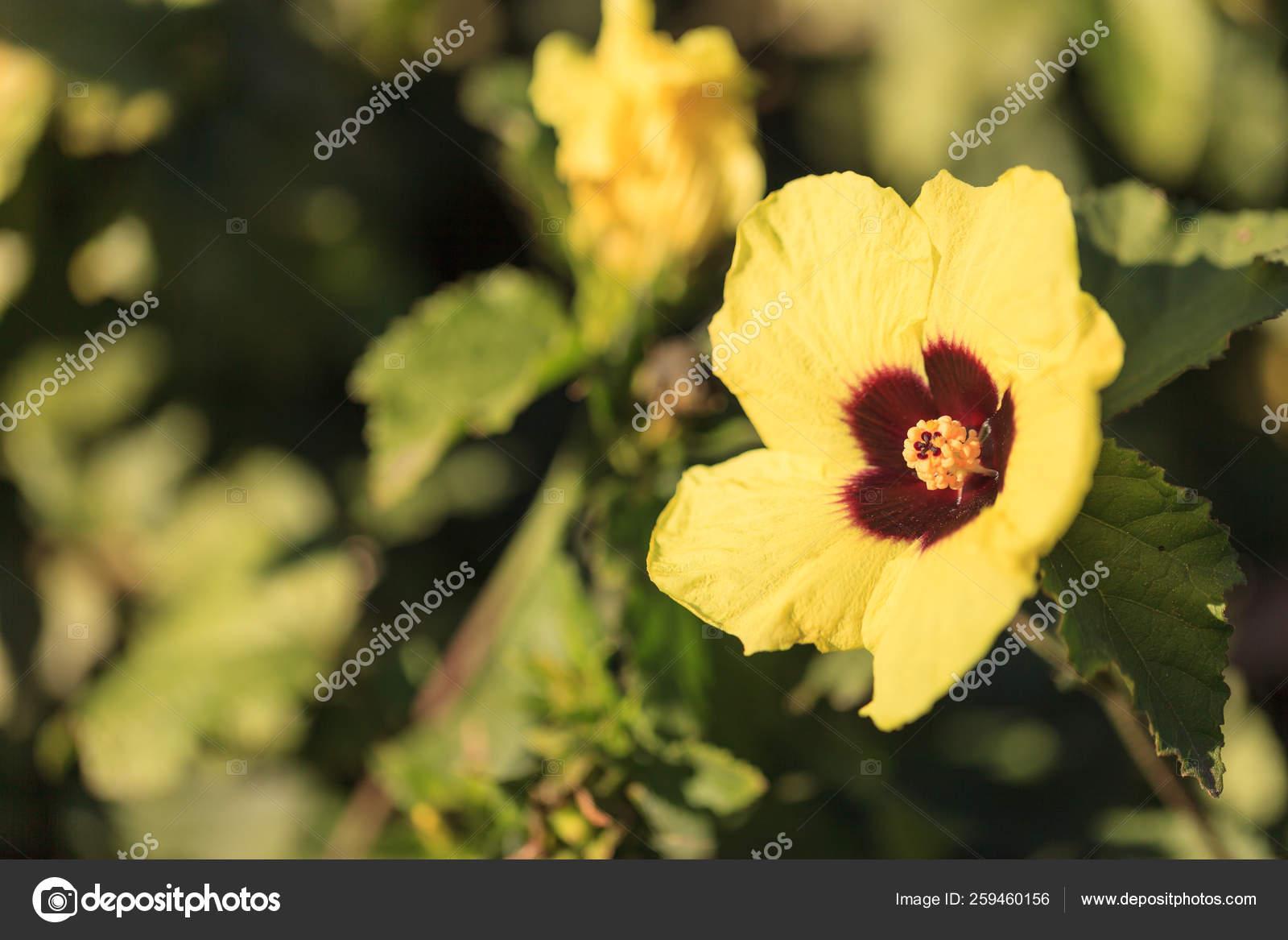 Yellow Red Hibiscus Flower Detailed Stamen Pistil Hawaiian Garden