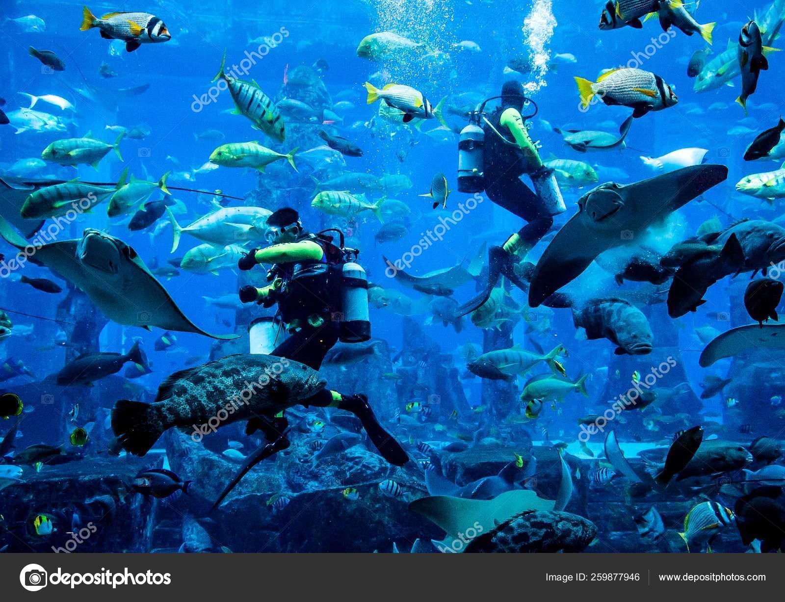 Dubai Uae November Huge Aquarium Hotel Atlantis Palm Islands Diver Stock Photo C Yayimages 259877946