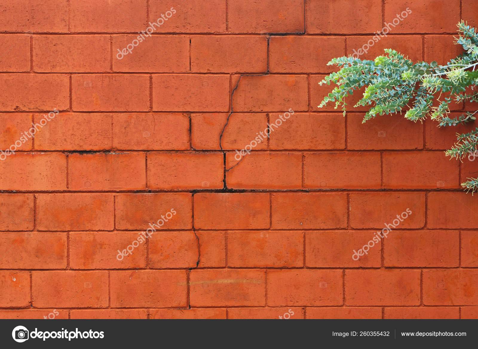 Image of: Cracked Painted Cinder Block Wall Tree Branch Right Side Frame Stock Photo C Yayimages 260355432