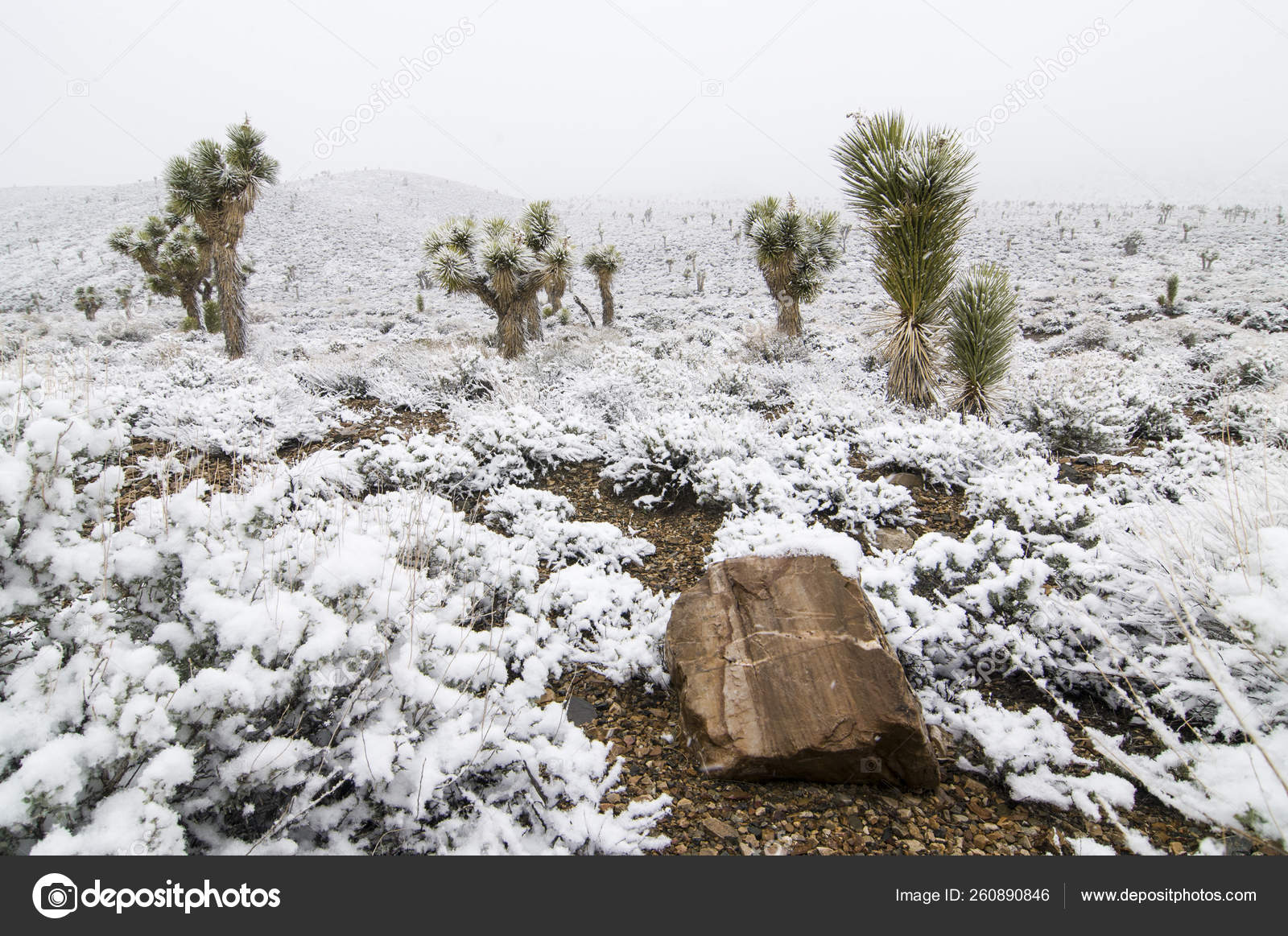 Snow Covered Joshua Trees Death Valley National Park