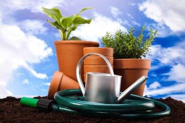 Gardening concept, work tools, plants