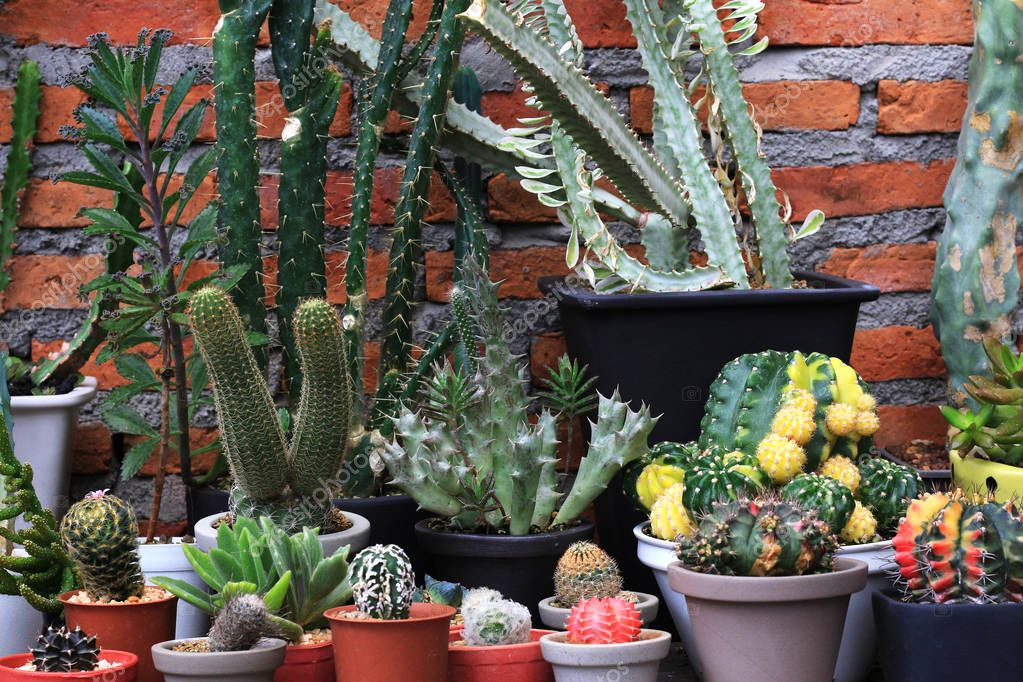 Several Types of Cacti Red Brick Background