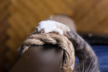 Cat's paw with sharp claws on the rope. Close-up.