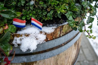 Two small flags of the Netherlands are set in the snow, in an old wooden barrel with green plants. Close-up.