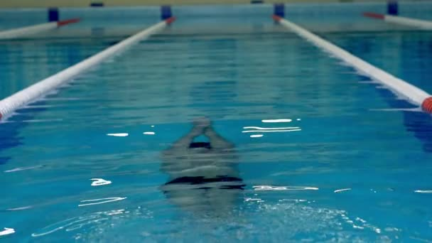 Swimmer swims under the water during training