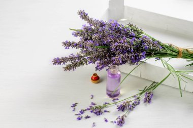 Lavender flowers and body lavender oil on the rustic white background. Spa skin and body care.