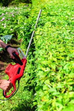 man worker  mowing hedges outdoors