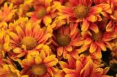 Flowers bloom in the sun
