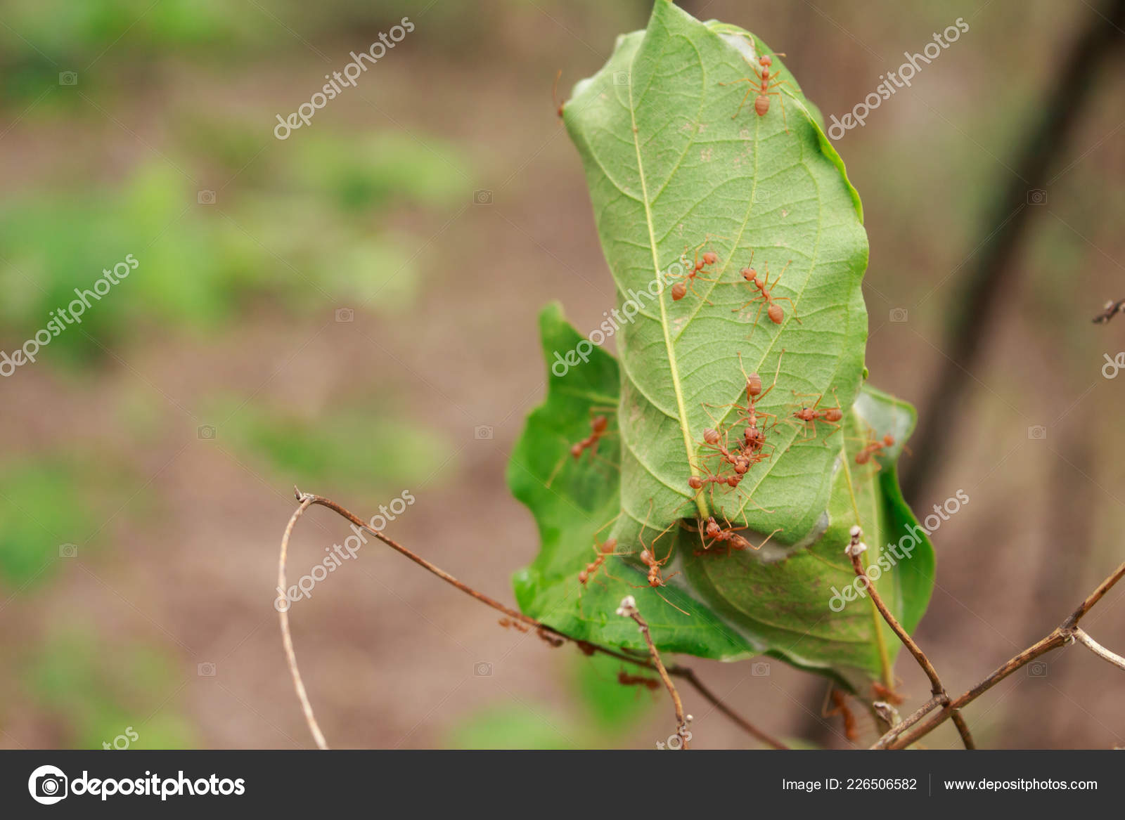 Ants Nest Teamwork Working Insect Animal Forest Stock Photo