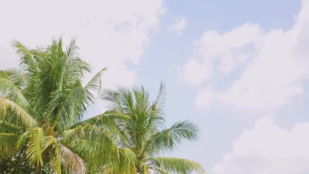 4K Palm tree or leaves of coconut tree waving blown along with the wind on a sunshine day
