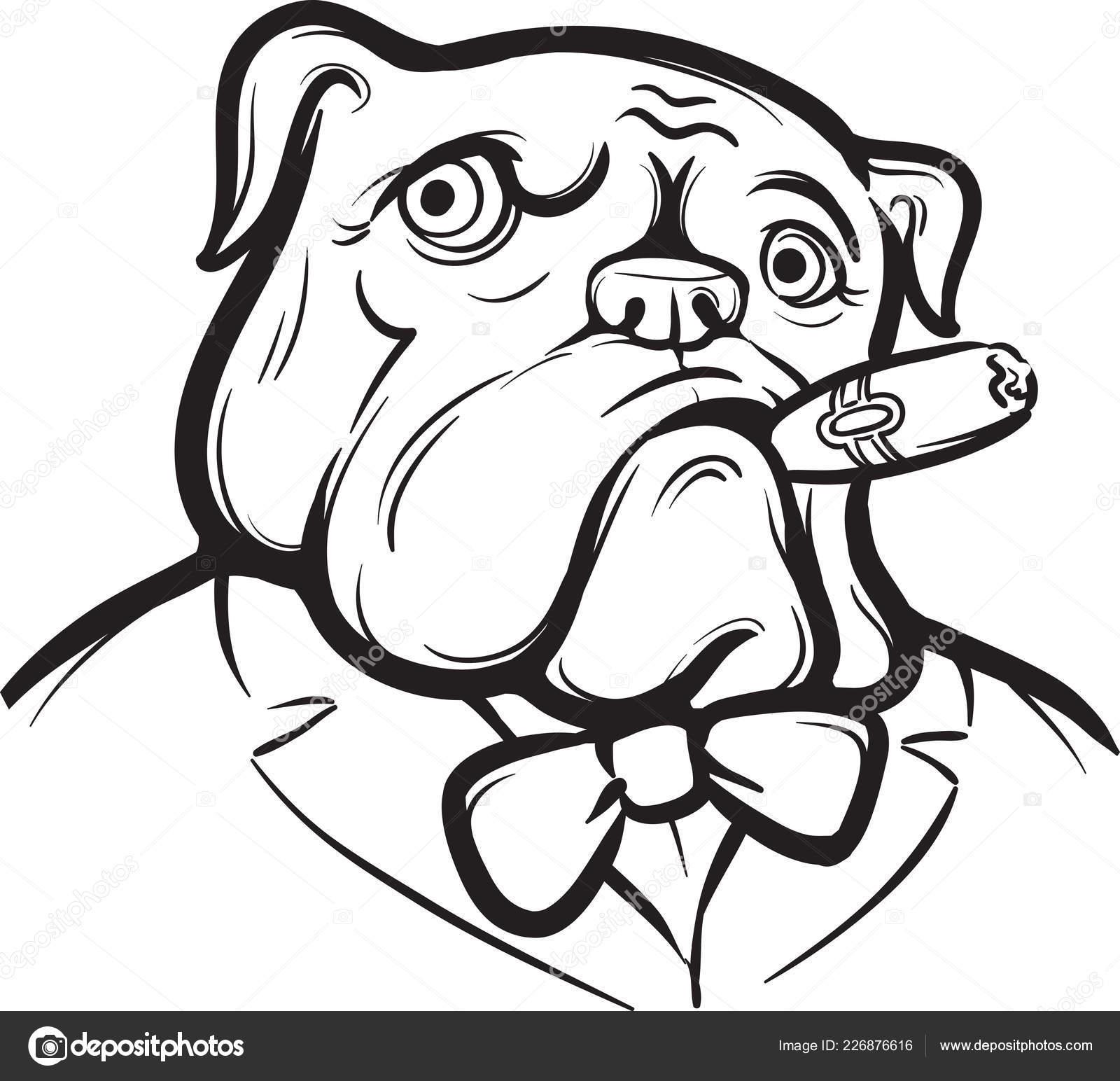 Whiteboard Tekening Oud Engels Bulldog Met Sigaar Vectorafbeelding Door C Onelinestock Vectorstock 226876616
