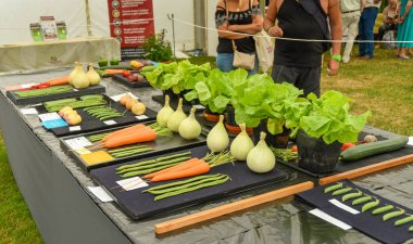BUILTH WELLS, WALES - JULY 2018: Selection of entries laid out on a display table for the vegetable growing competition in Builth Wells.