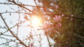 Pohled na květinové stromy