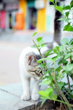 View of cute white cat
