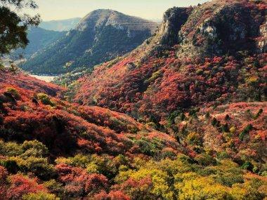 """Картина, постер, плакат, фотообои """"осенний пейзаж в горах"""", артикул 280760742"""