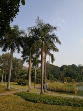 scenic view of calm outdoor scene