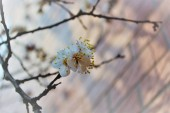 Pohled na květinový květ ve dne