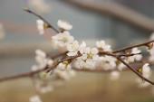 Jarní květiny kvetou na stromě v zahradě