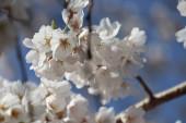 krásný botanický záběr, přírodní tapety
