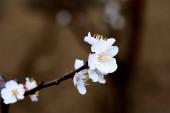 Uzavřít záběr krásných kvetoucích květin