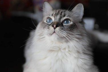 Portrait of a cute cat